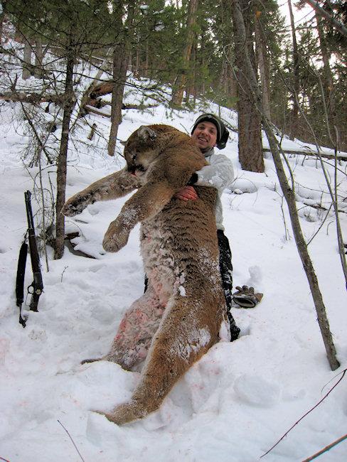 numero de cougar canada